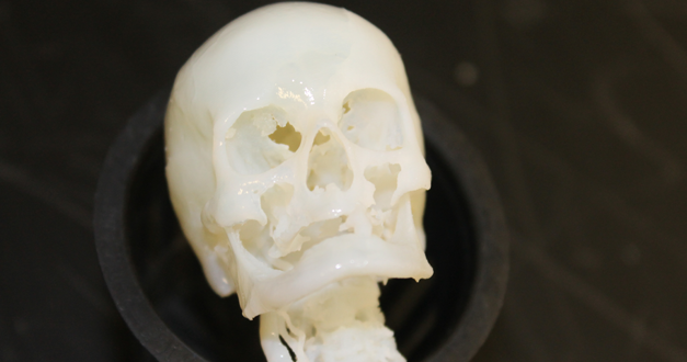 Full Skull 3D Print