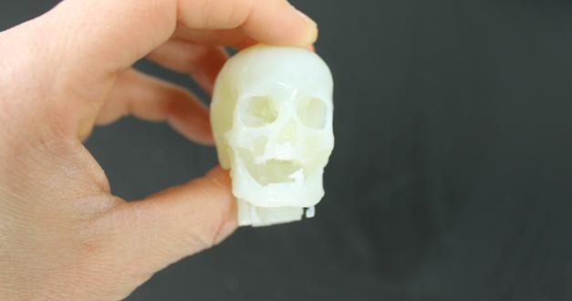 Skull Model 3D